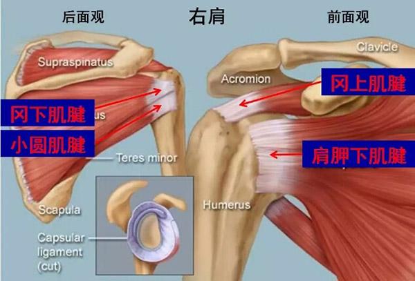 我院骨伤科在上海十院朱裕昌主任指导下开展启东市首例肩关节镜下肩袖损伤修复手术